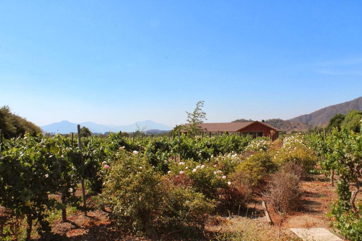Casablanca Wine Chile